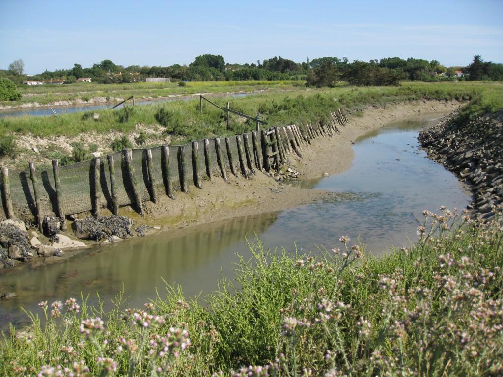 Marais du Fenouiller - Étier