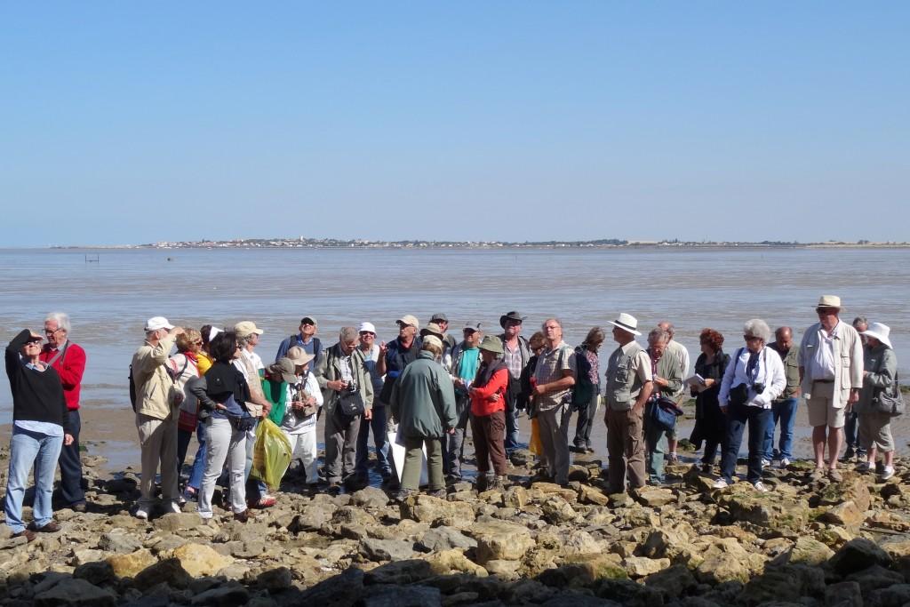 AVG. 2014.06.15 Le groupe de l'AVG en admiration devant la falaise kimméridgienne du Rocher d'Yves