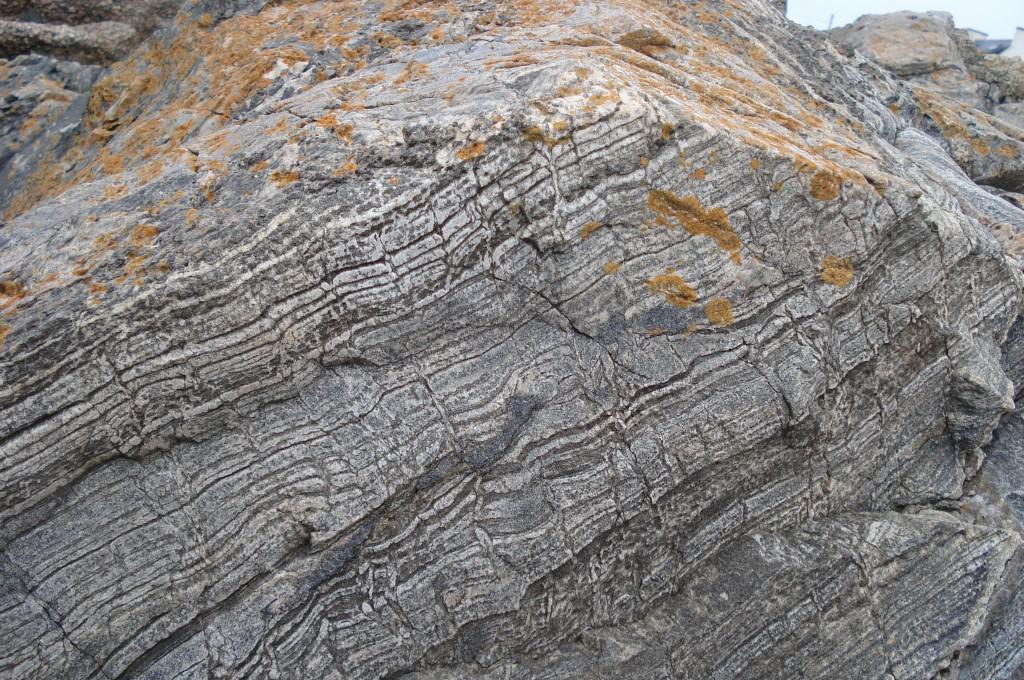 Terriers de Vers (en coupe longitudinale) dans une enclave sédimentaire d'âge dévonien incluse dans du granite carbonifère - La Grève Rose (Trégastel - 22)