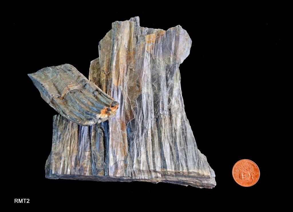 Schistes argileux (crénulation et linéation) - Ordovicien - (85 - Le Girouard)