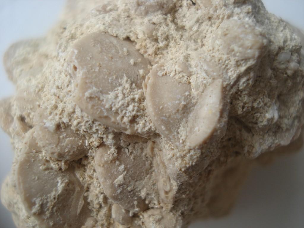 Calcaire à Nummulites