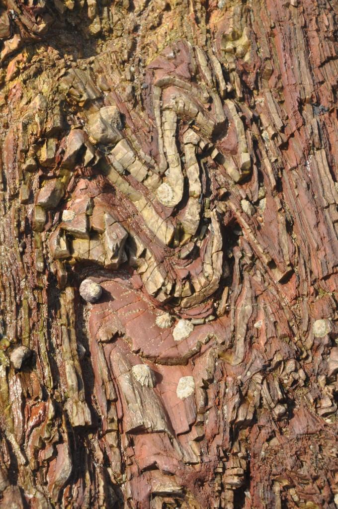 Plis isoclinaux dans une série formée par l'alternance de lits de micro-quartzites et de schistes rouges