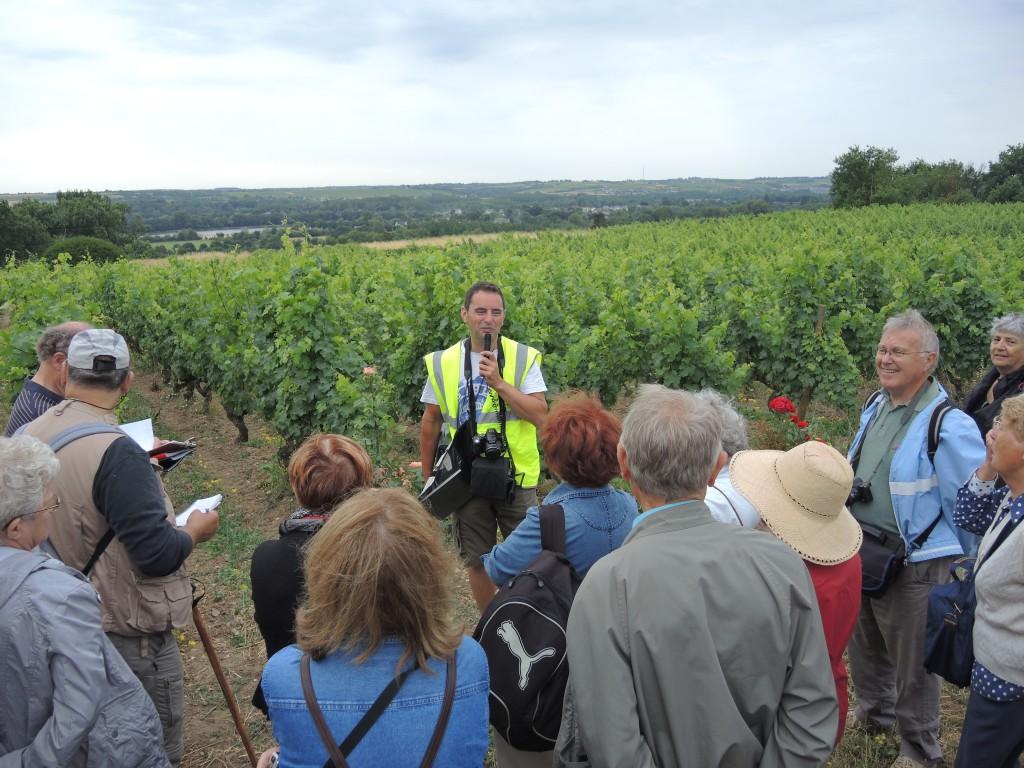 AVG. 2015.07.07. Sortie Synclinorium de Saint-Georges-sur-Loire - Dans les vignes de la Roche aux Moines avec Fabrice Redois
