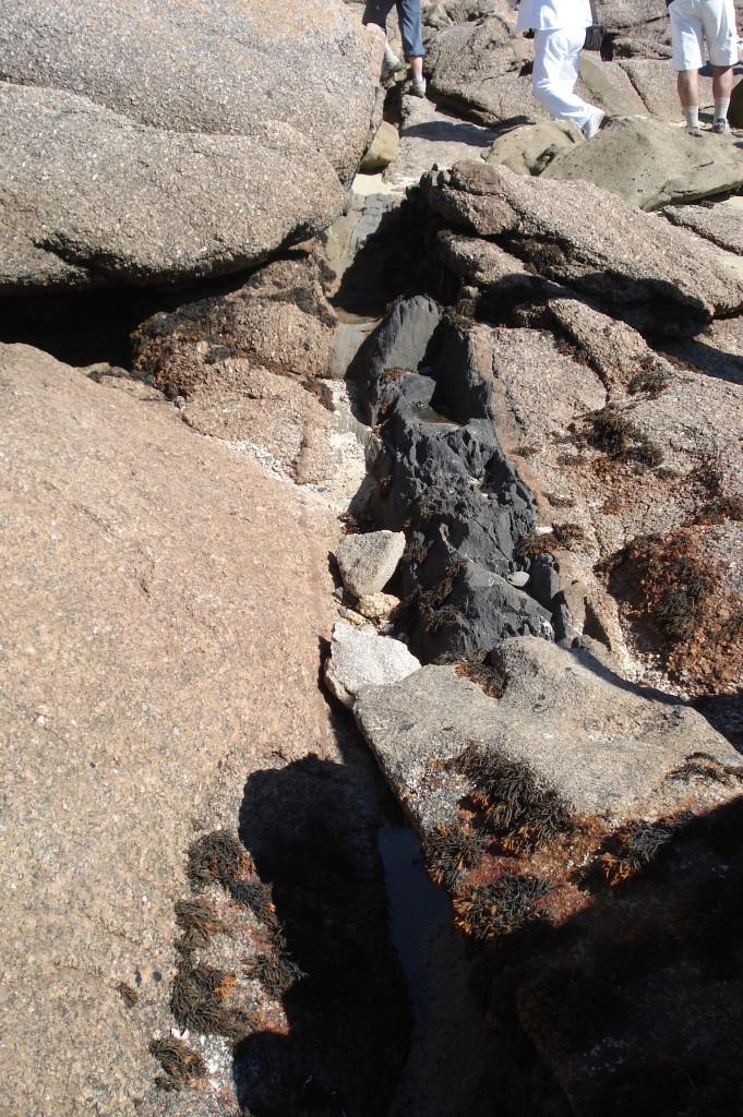 Filon de kersantite dans du granite rose - Presqu'Île de Toénot (22 - Trébeurden)