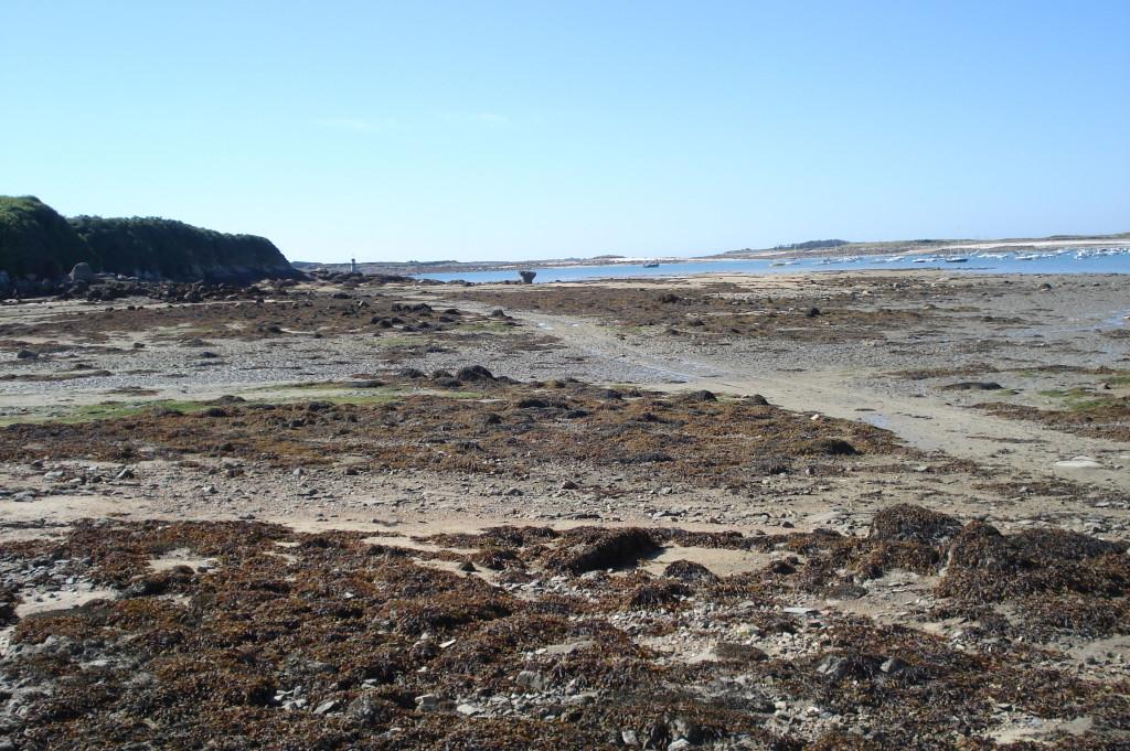 AVG. 2012.09.09. Estran de la presqu'île de Toénot
