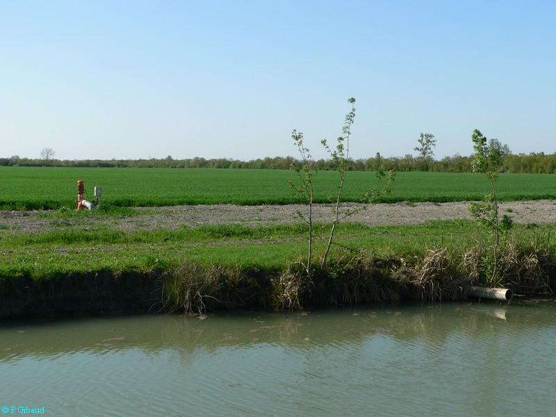 Marais desséchés (absence d'arbres, culture mécanisée)