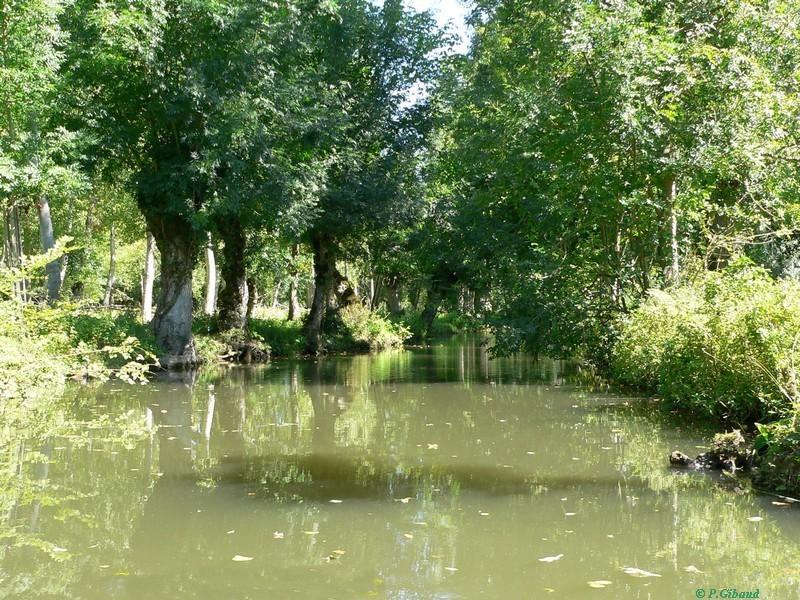 Marais mouillés (inondables et sillonnés de canaux)