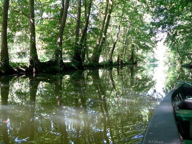 Canal évacuateur dans les marais mouillés