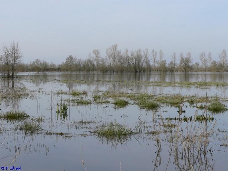 Marais inondé