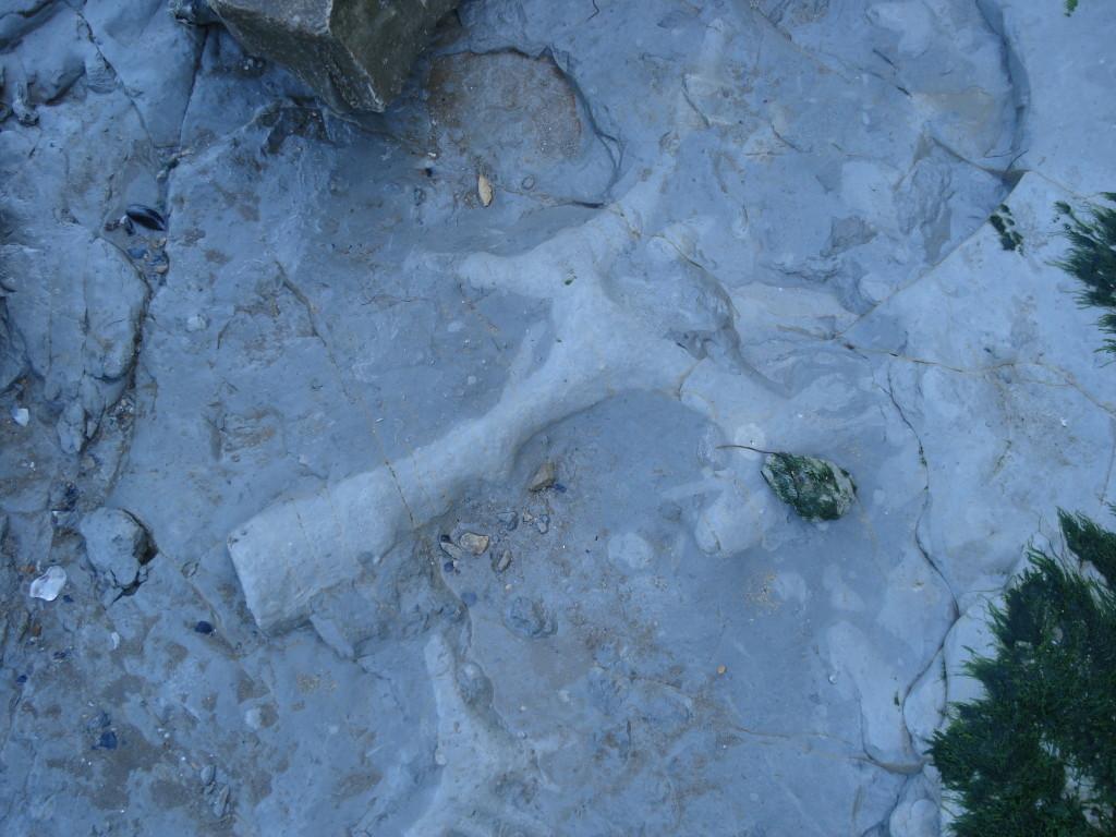 Terriers - Kimméridgien - Falaise du Rocher d'Yves (17)