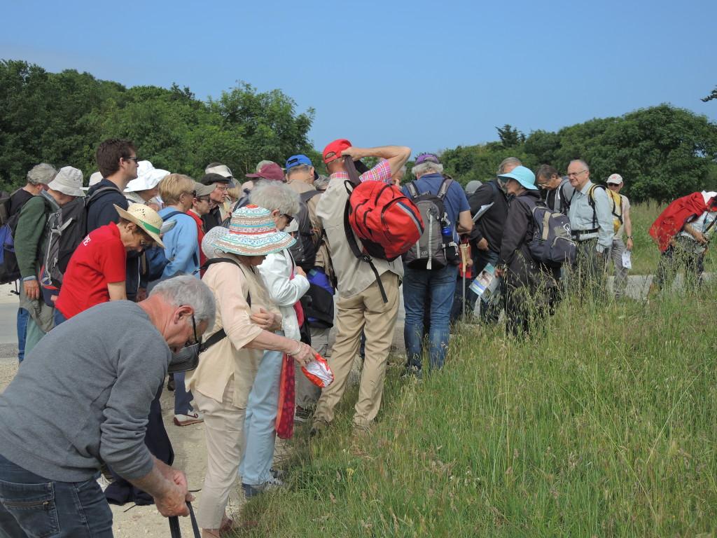 AVG. 2016.06.05. Île d'Aix - En route pour la forêt fossile