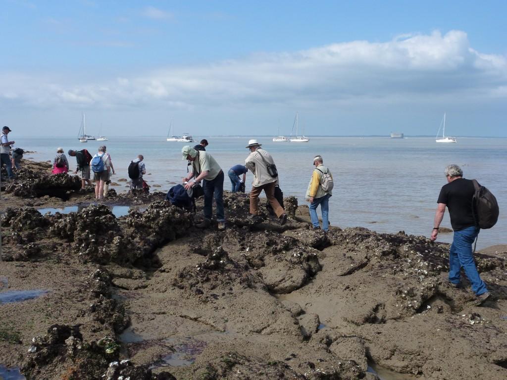 AVG. 2016.06.05. Île d'Aix - A la recherche de ... bois fossiles à défaut du tronc !